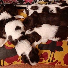 Собаки - Йорк шоколадный,биро., 0