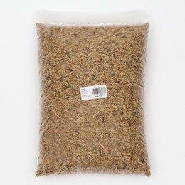 Семена - Семена Рожь, 3 кг, 0