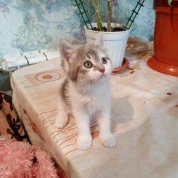 Кошки - Пушистый котенок и гладкошерстный, 0