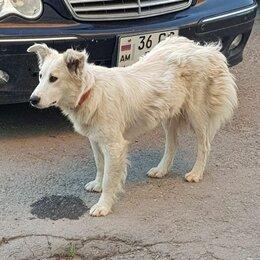 Животные - Найдена собака, 0