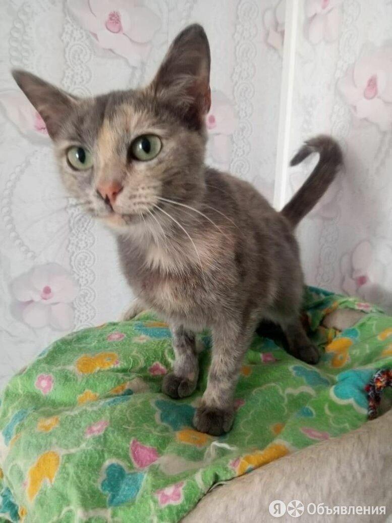 Кошка молодая стерилизованная по цене 10₽ - Кошки, фото 0