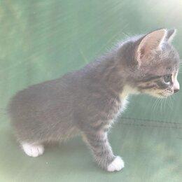 Кошки - Отдам в добрые руки котенка, 0
