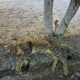 Кошки - Кот Сёма, 0