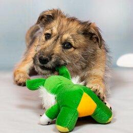 Собаки - щенок Кнопа в добрые руки, 0