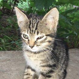 Кошки - Пропал котёнок, разыскивается., 0