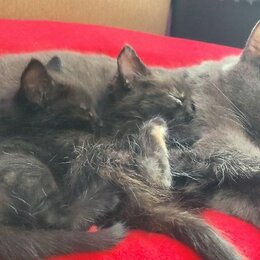 Кошки - Котеночек. , 0