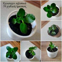 Комнатные растения - Комнатные растения , 0