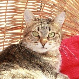Кошки - Редиска. Милая миниатюрная кошка в добрые руки., 0