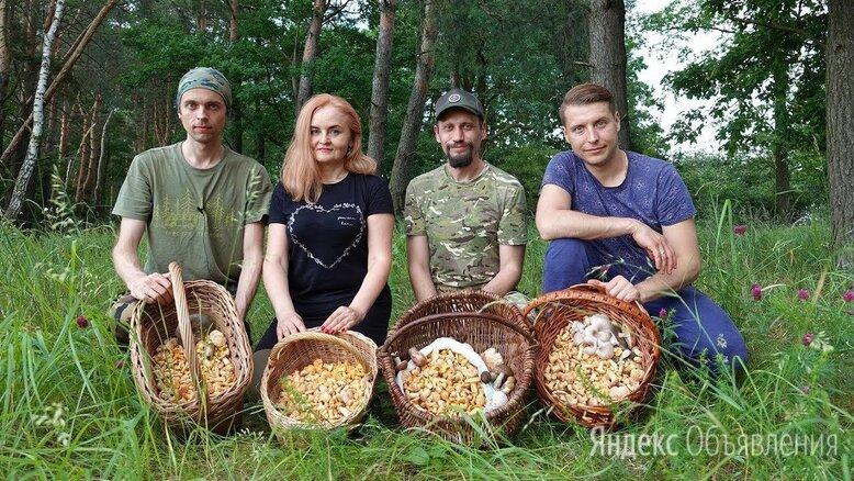 Сборщик грибов Вахта с проживанием - Сборщики, фото 0