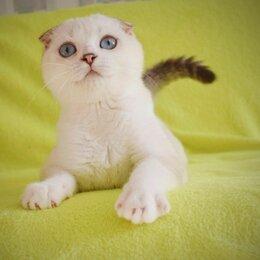 Кошки - Шотландские котята, 0