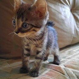 Кошки - Курильский бобтейл, 0