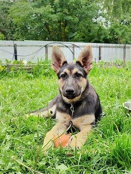 Услуги для животных - Передержка собак, дрессировка, кинолог, 0