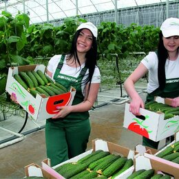 Рабочие - Работник на уборку овощей, 0