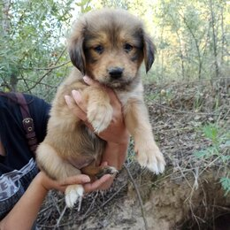 Собаки - Щенок 2 месяца, 0