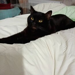 Кошки - Кот молодой, 0