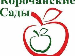Рассада, саженцы, кустарники, деревья - Купить саженцы яблони, 0