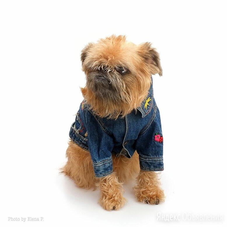 Джинсовая куртка для собачки (Италия) по цене 1500₽ - Одежда и обувь, фото 0