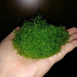 Растения для аквариумов и террариумов - Риччия аквариумное растение, 0