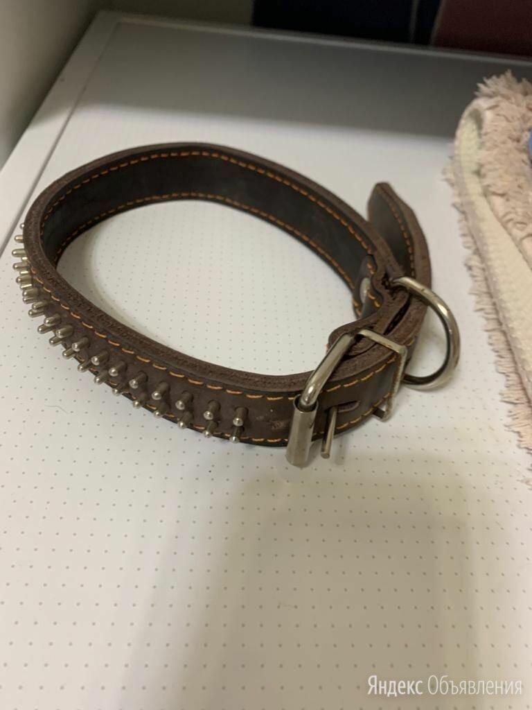 Новый кожаный ошейник по цене 300₽ - Ошейники , фото 0