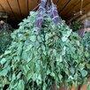Банные веники,береза,липа,дуб по цене 80₽ - Аксессуары, фото 0