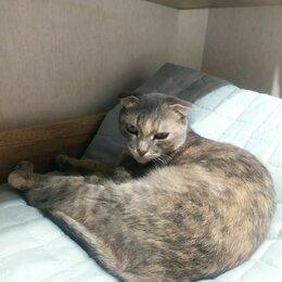 Животные - Шотландская вислоухая кошка, 0