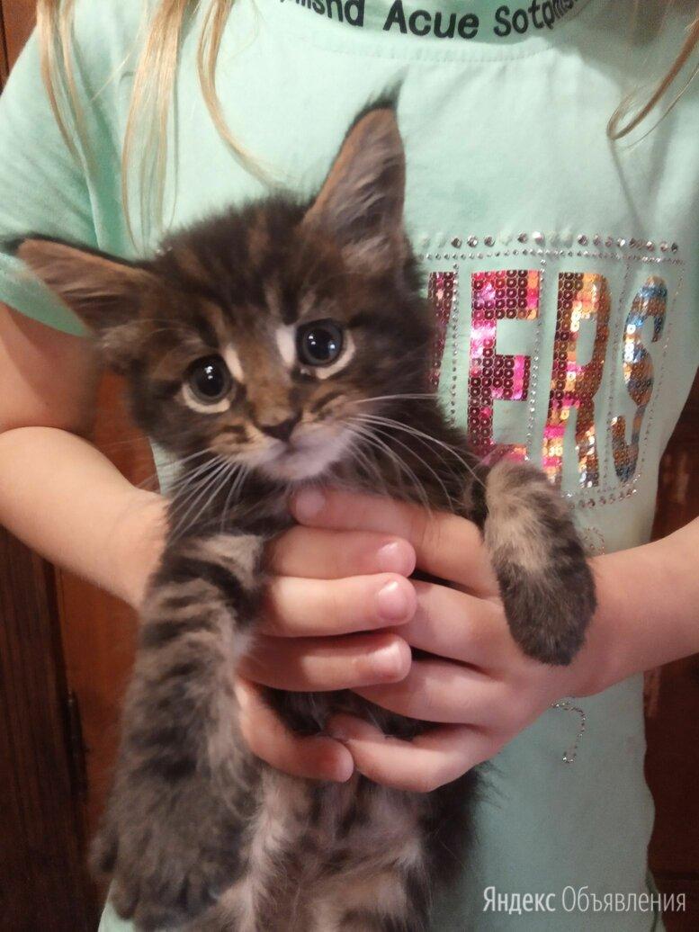 Кошечка по цене 3500₽ - Кошки, фото 0