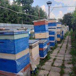 Сельскохозяйственные животные и птицы -  Пасека в Гаврилово. Семинары по пчеловодству., 0