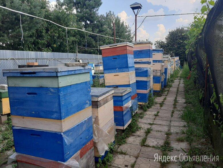 Пасека в Гаврилово. Семинары по пчеловодству. по цене не указана - Сельскохозяйственные животные и птицы, фото 0