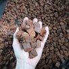 Кора для орхидей галтованная (гладкая) по цене 210₽ - Субстраты, грунты, мульча, фото 4