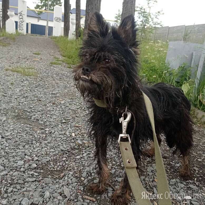 Собака в добрые руки по цене даром - Собаки, фото 0