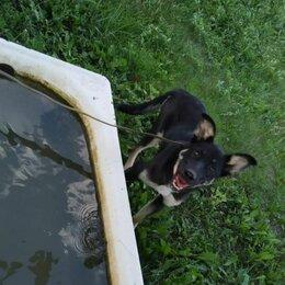 Собаки - Чудесный щенок в добрые руки ❣, 0