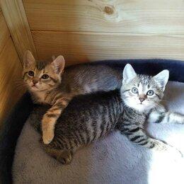 Кошки - счастье в дом, 0