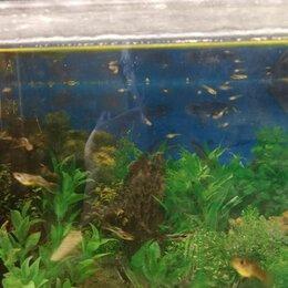 Аквариумные рыбки - Аквариумныуе рыбки, 0