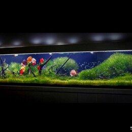 Декорации для аквариумов и террариумов - Нестандартные аквариумные решения, 0