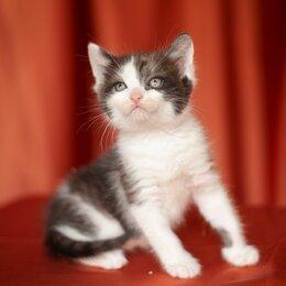 Кошки - Пушистый котенок с сердечком на правом боку, 0