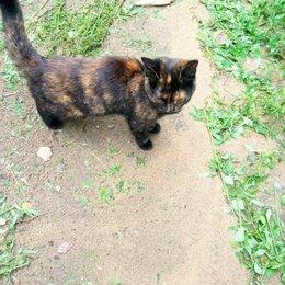 Кошки - Дворовая кошка черепаховая, 0