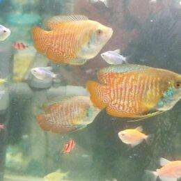 Аквариумные рыбки -  рыбки аквариумные и живые растения, 0