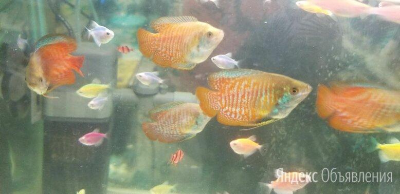 рыбки аквариумные и живые растения по цене 120₽ - Аквариумные рыбки, фото 0