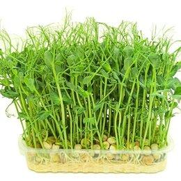 Семена - Горох зеленый (Мадрас) для проращивания микрозелени, 200г, 0