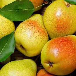 Мойщики - Мойщик фруктов с проживанием, 0