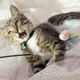 Кошки - Очень ласковый парень Сенечка 3,5 мес ищет и семью, 0
