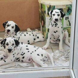 Собаки - щенки далматина, 0