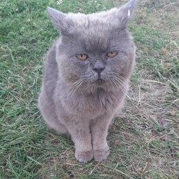 Кошки - Котика, переставшего приносить выгоду, просто бросили на даче...., 0