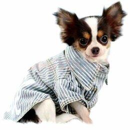 Одежда и обувь - Джинсовая рубашка для собаки, 0
