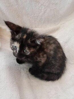 """Кошки - """"Подарки от дачников""""-выброшенные котята..., 0"""