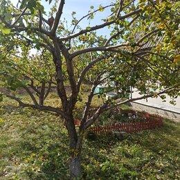 Бытовые услуги - Обрезка деревьев, 0