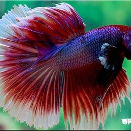 Аквариумные рыбки - Аквариумные рыбки, 0
