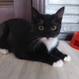 Кошки - Красавице маркизе Манане нужна передержка или дом, 0