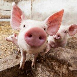 Работа с животными - Рабочий на ферму (вахта), 0