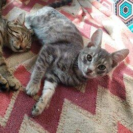 Кошки - Котята -  крысоловы, 0